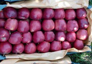 بلاتکلیفی بیش از ۱۰هزار تن سیب دماوندی درسردخانه ها
