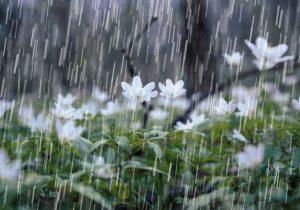 بیشترین بارش باران و برف در لواسان و آبعلی ثبت شد
