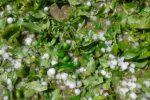تگرگ ۴۷۸ میلیارد تومان به باغات دماوند خسارت زد