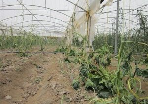 هشدار مدیریت جهاد کشاورزی به بهرهبرداران بخش کشاورزی در منطقه دماوند
